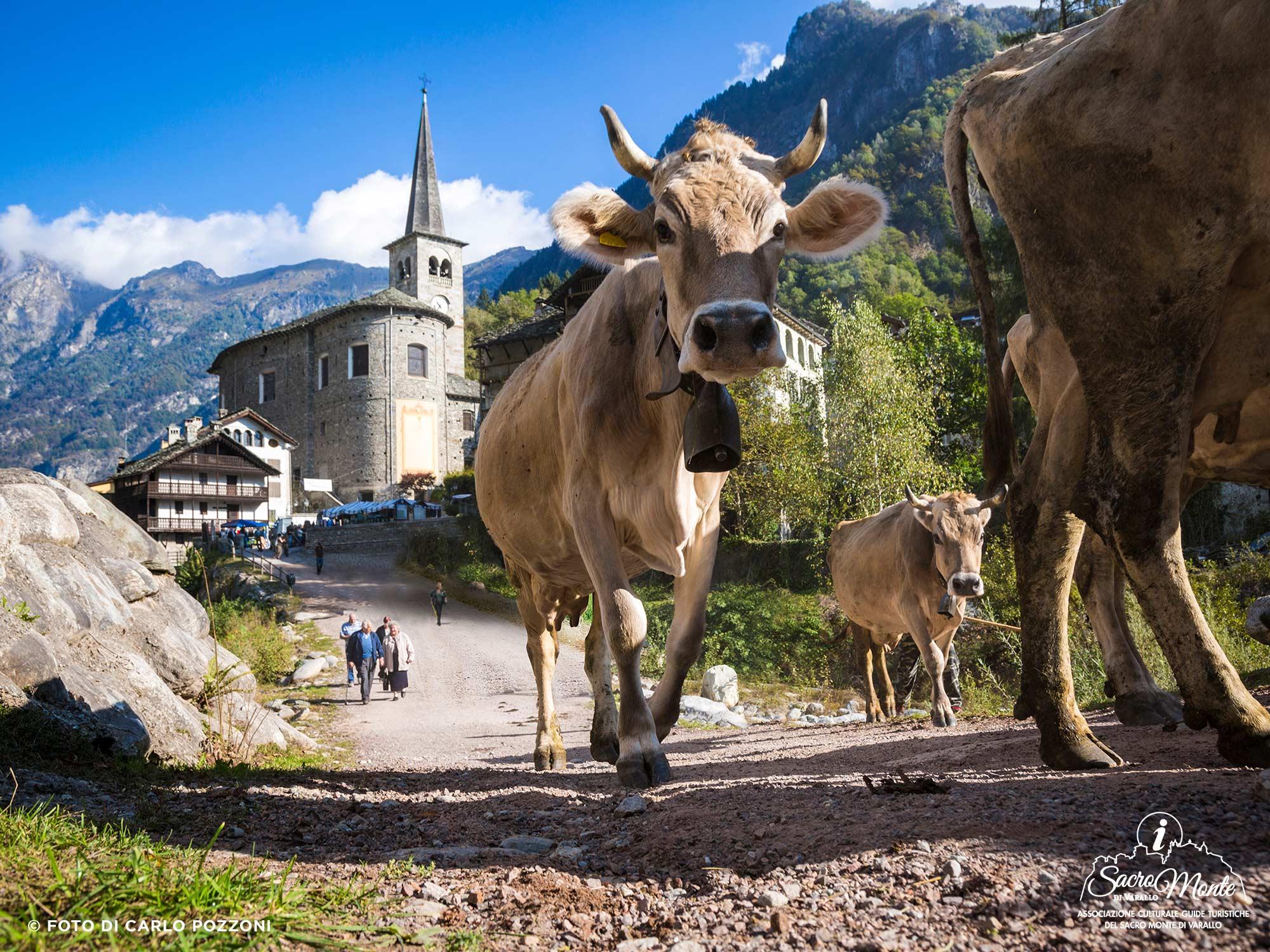 Sacro Monte di Varallo tour stalle valsesia