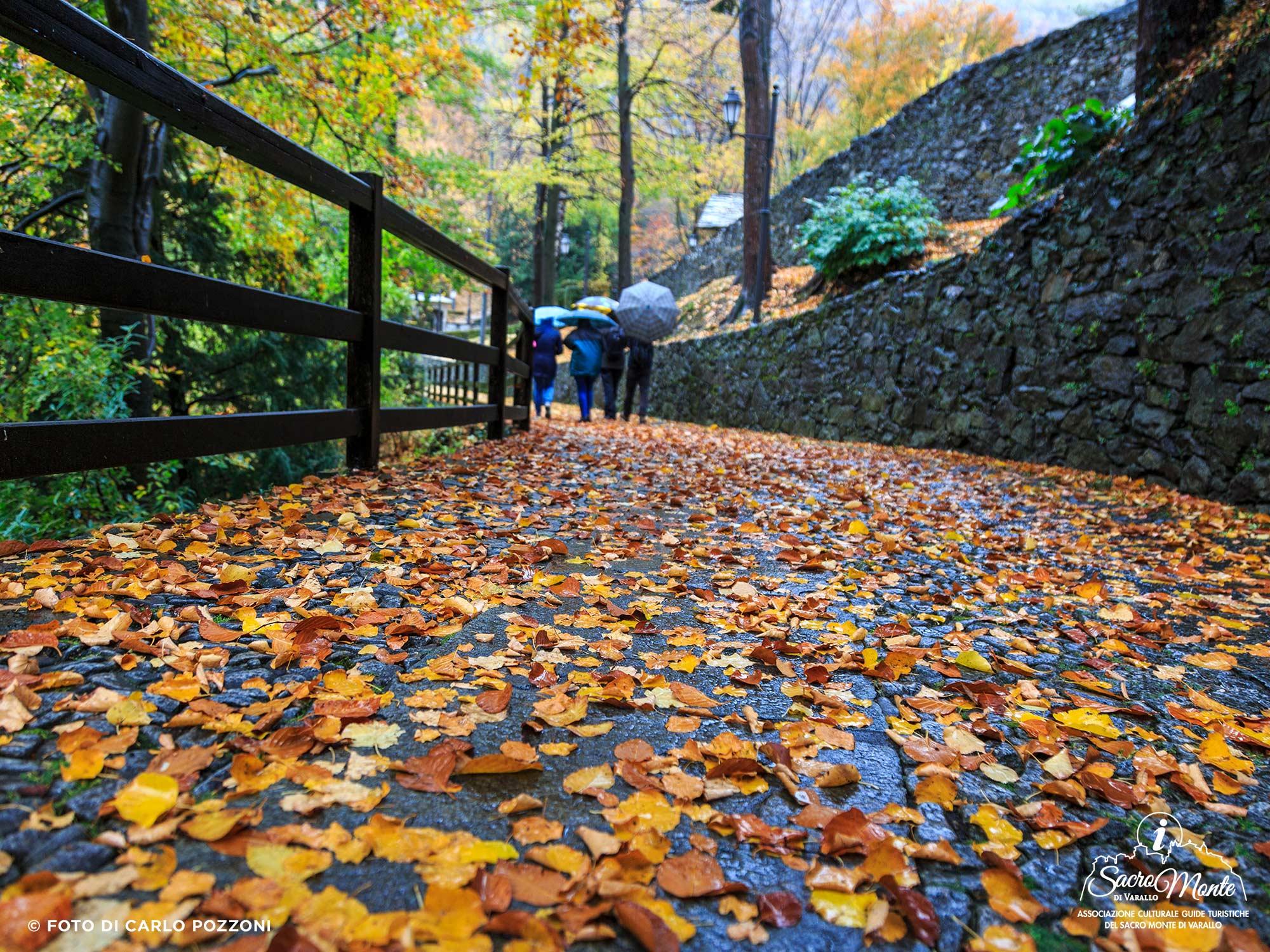 Sacro Monte di Varallo, visite naturalistiche